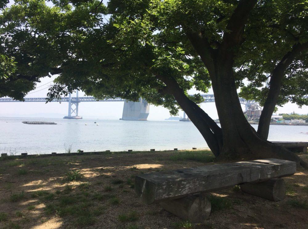 沙弥島ナカンダ浜にある一本の木の下