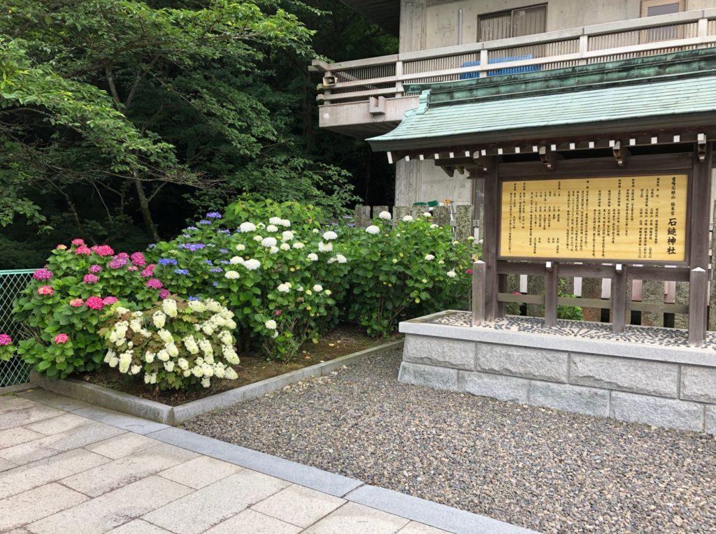 石鎚神社の紫陽花はきれい