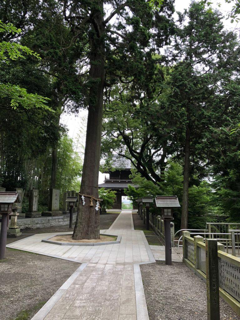 石鎚神社の御神木の裏面から