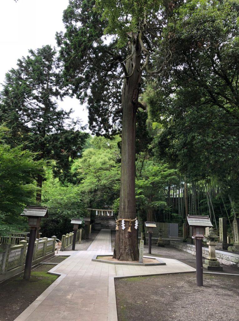石鎚神社の御神木の正面