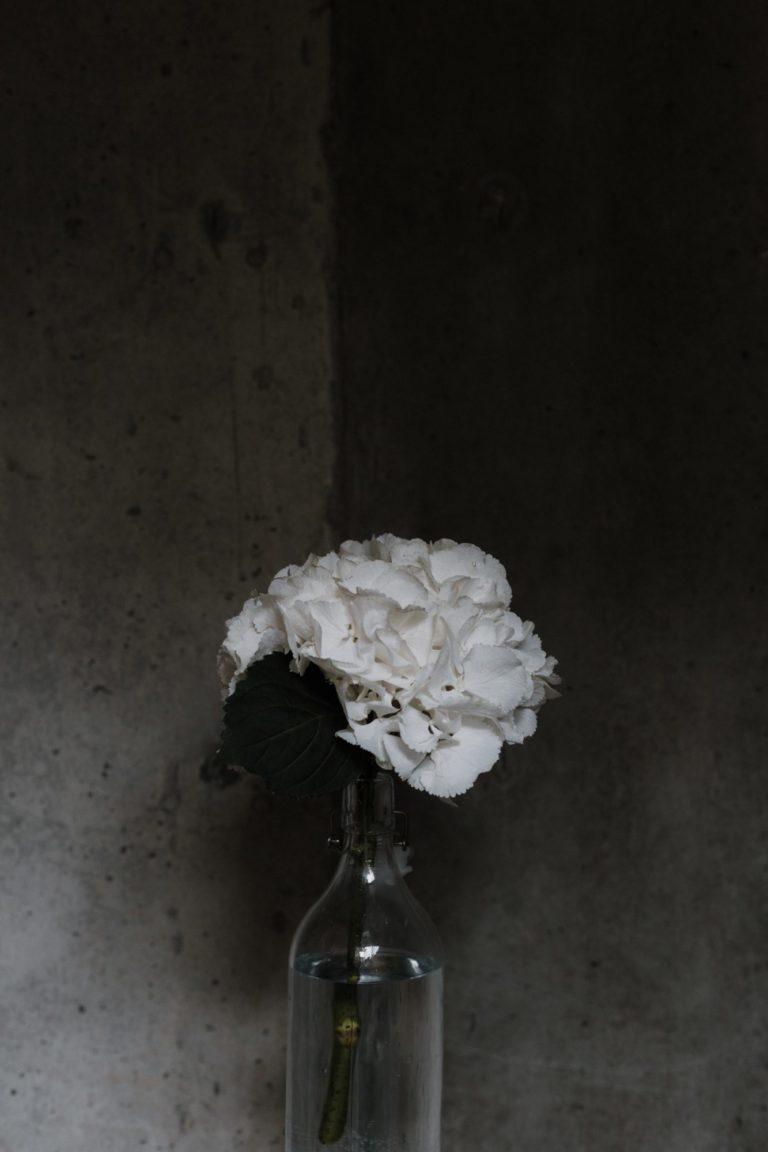 unsplushのモノクロの花