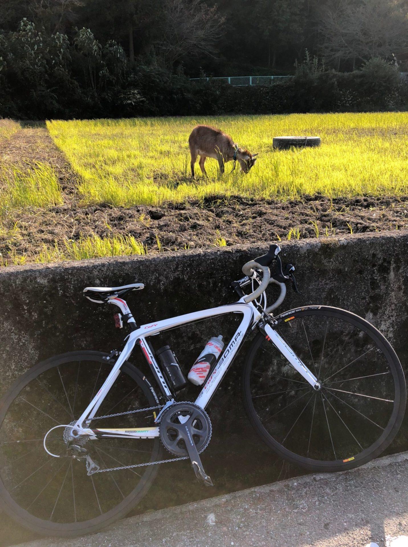 ヤギと戯れるサイクリング
